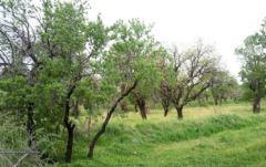 باغستان؛ کشف بزرگ سال ۹۵